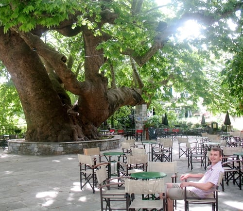 Guided walking Greece Pelion plane tree