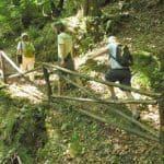 Celebrating Mt Pelion