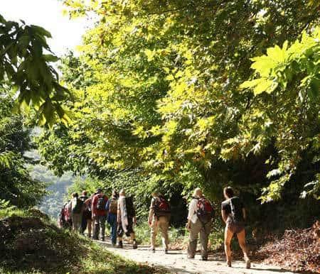 pelion forest walkers